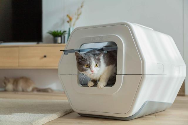 lulupet ai cat litter box 2